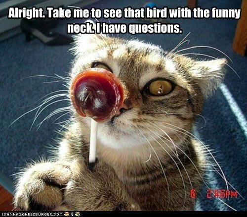 captions Cats commercial lollipop Owl questions reference tootsie roll pop TV - 6439944960