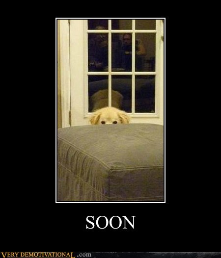 dogs hilarious SOON - 6440099072