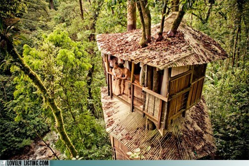 canopy,hut,jungle,treehouse