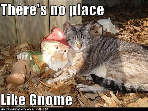 captions Cats classic classics garden gnome home house theres-no-place-like-hom - 6440236288