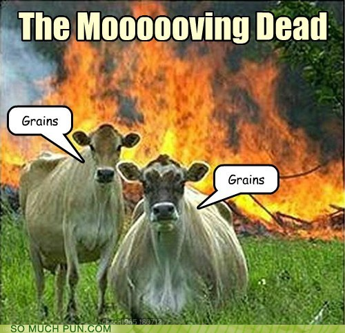 brains,cow,cows,dead,evil cows,grains,moving,similar sounding,zombie