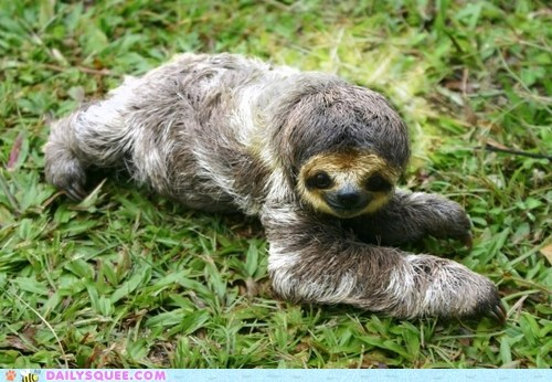 climbing slow claws squee sloth
