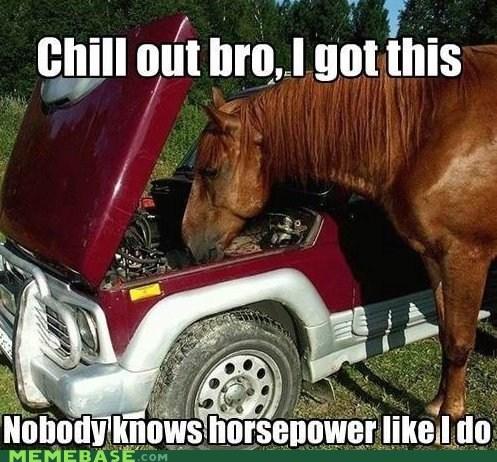 cars,horse,horsepower,mechanic,Memes,sarah jessica parker