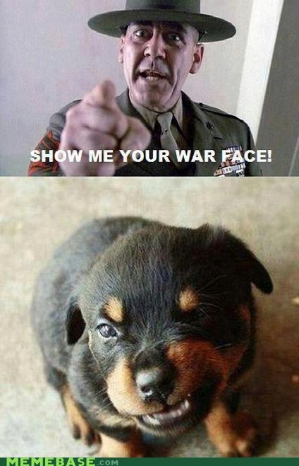 dogs Memes play face sergeant war face