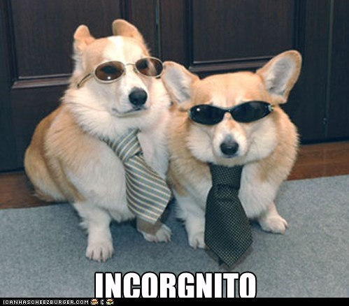 corgi,disguise,incognito,similar sounding,sunglasses,syllable,tie,ties