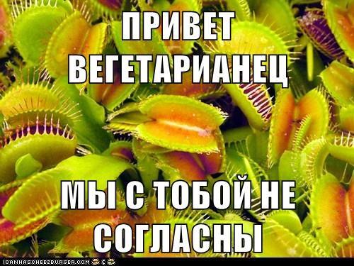 Cheezburger Image 6440958208