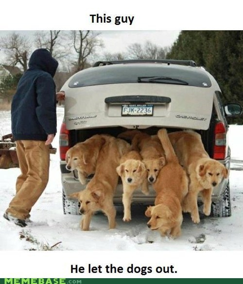 baja men dogs Memes Music who let the dogs out - 6441256704
