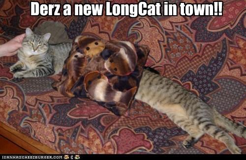 Cheezburger Image 6441387264