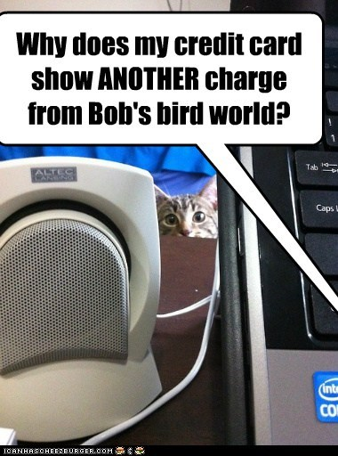 bird,captions,Cats,credit card,guilty,money,steal