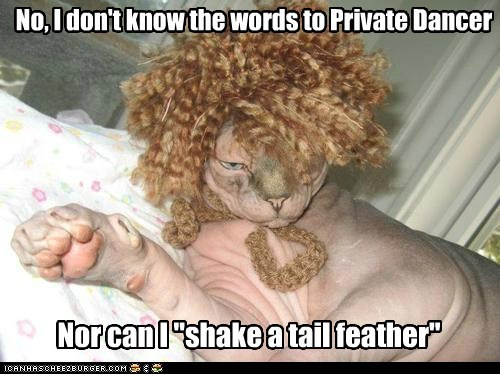 captions Cats dance private dancer shake tail feather wig - 6441602304