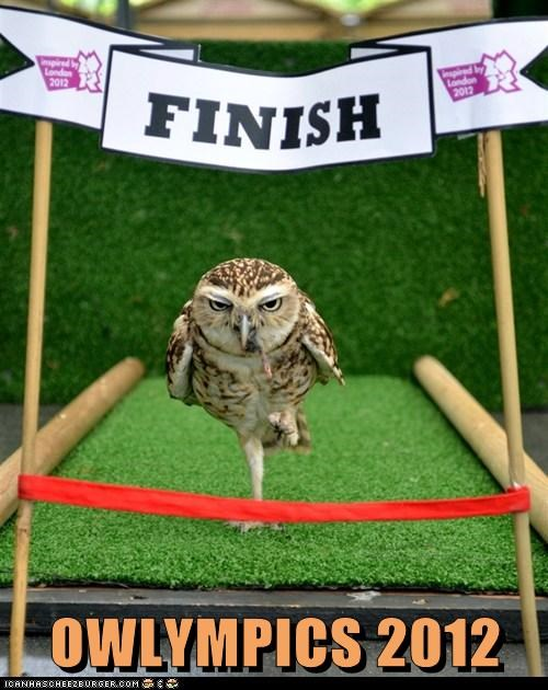 London olympics owls political pictures - 6441811200