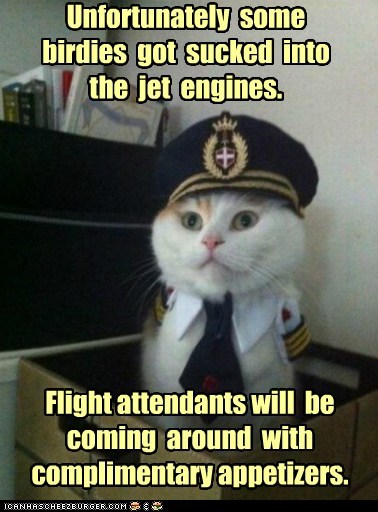 appetizer birds Captain Kitteh food jet engine nom - 6442259456