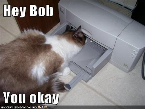 bob captions Cats halp Okay printer stuck - 6442719488