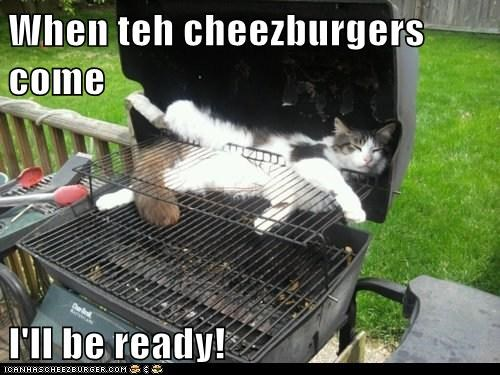 bbq captions Cats cheezburger cook food hungry ready summer
