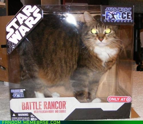 cat It Came From the It Came From the Interwebz rancor scifi star wars - 6443258624