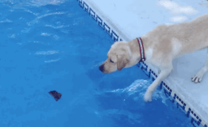 gifs of dogs failing in cute and funny ways