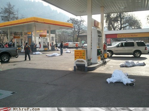 arctic drilling,gas,gas station,polar bears,shell