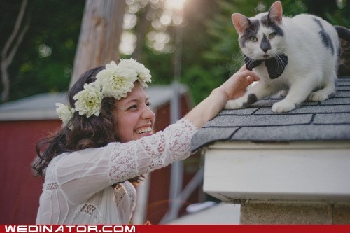 bowtie bride Cats funny wedding photos - 6443492864