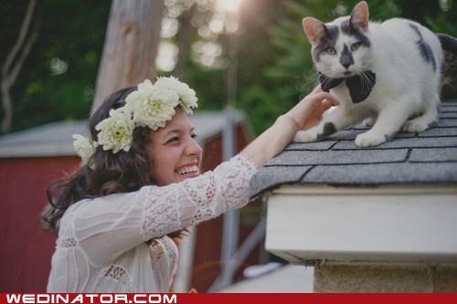 bowtie bride Cats funny wedding photos - 6443492864
