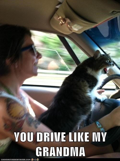 captions car Cats drive grandma insult road rage yell
