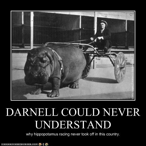 DARNELL COULD NEVER UNDERSTAND why hippopotamus racing never took off in this country.