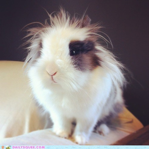 bad hair bunny floof happy bunday rabbit - 6444105728