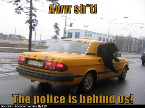 Cheezburger Image 6444559872