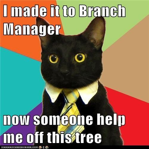 Business Cat - 6444926720