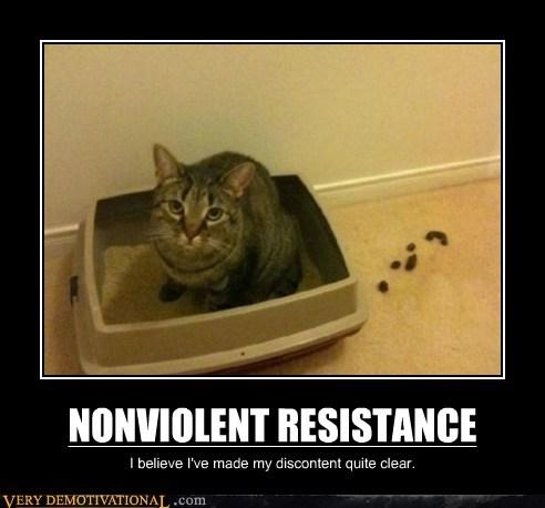 cat hilarious nonviolent poop resistance - 6445323264