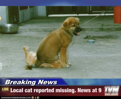 Breaking News - Local cat reported missing. News at 9