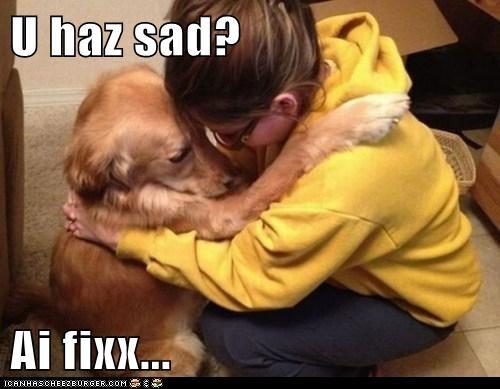 dogs feels golden retriever hug Sad - 6445948160