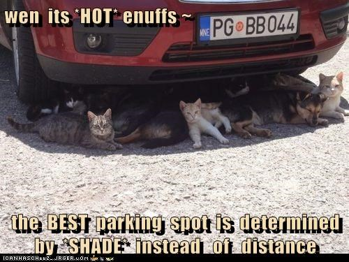 wen its *HOT* enuffs ~ the BEST parking spot is determined by *SHADE* instead of distance