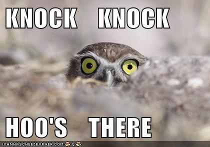 hoot,joke,jokes,knock knock,Owl,pun,whos-there