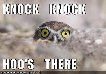 hoot joke jokes knock knock Owl pun - 6446061056