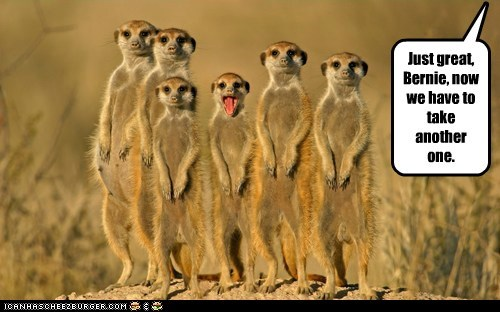 do over do-over great Meerkats pictures ruining - 6446169600