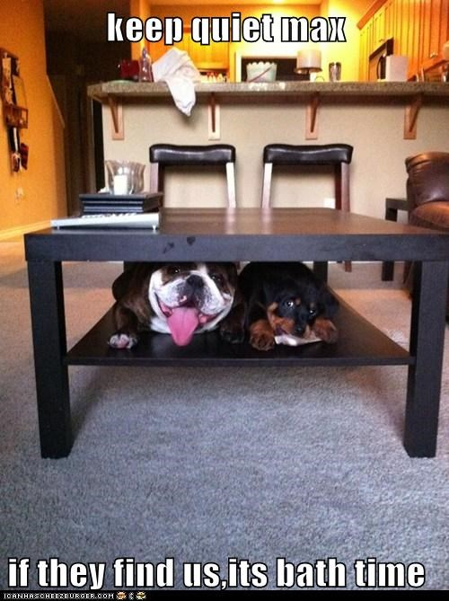 bath time bulldog dogs hiding place puppies Rotweiler - 6446264320
