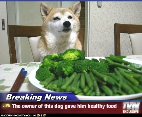 Breaking News The Owner Of This Dog Gave Him Healthy Food I Has A Hotdog Dog Pictures Funny Pictures Of Dogs Dog Memes Puppy Pictures Doge