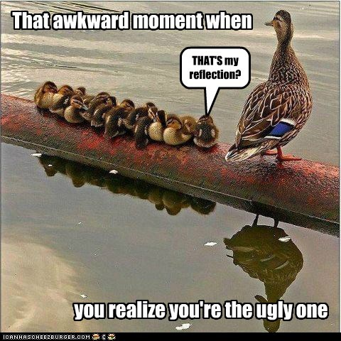 duck,ducklings,reflection,siblings,swan,the ugly duckling,ugly