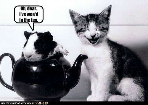 captions,Cats,gross,guinea pig,humans,laughing,peed,tea