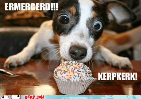 cupcakes,derp,dogs,Ermahgerd,goggie