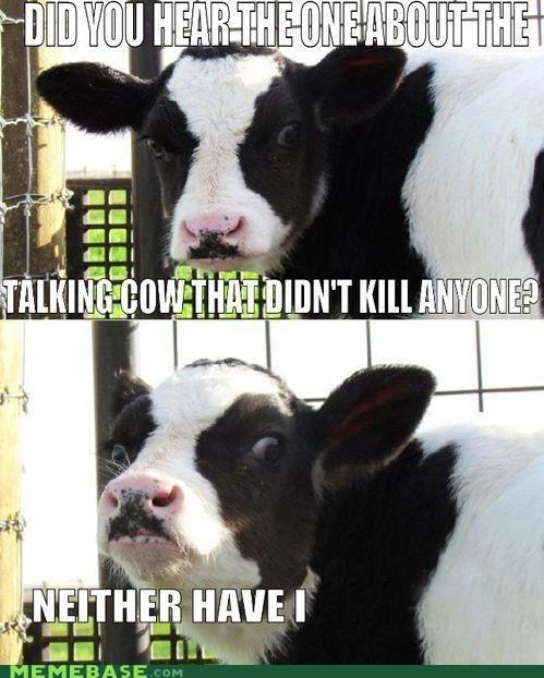 cow Memes - 6446716160