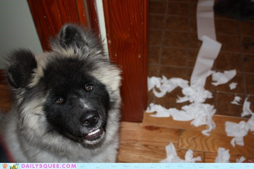 bathroom pet reader squee toilet paper - 6446850304