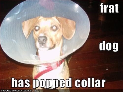 jack russel terrier - 644687616