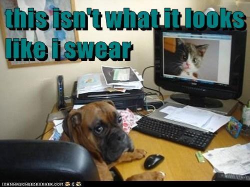 Cheezburger Image 6446902528