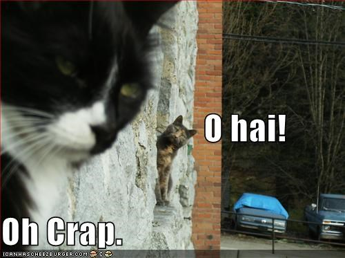 hai hello lolcats windows - 644718336