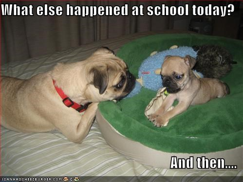 bed,pug,puppy,school