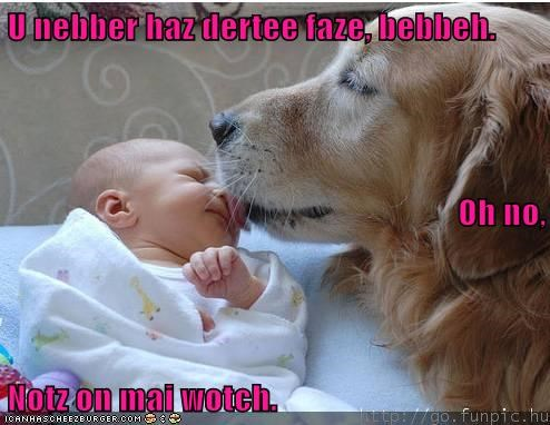 Cheezburger Image 6447533568