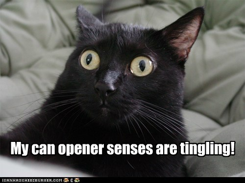 can opener captions Cats food noms Sixth Sense tingle - 6447915008