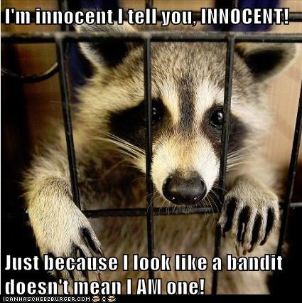 bandit,cage,captions,framed,innocent,jail,profiling,raccoon