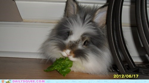 happy bunday lettuce pet rabbit reader squee relaxing - 6448230912